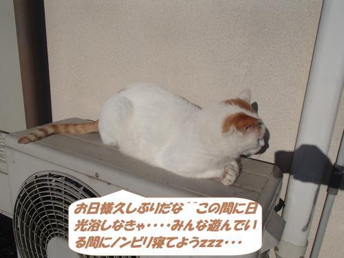PC090067_convert_20141210122744.jpg