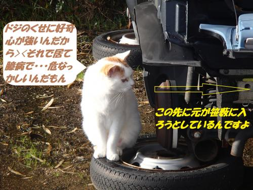 PC090072_convert_20141210122852.jpg