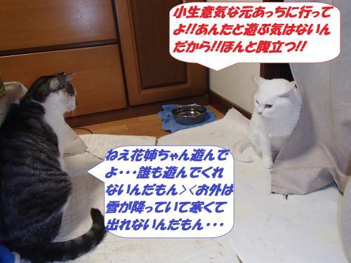 PC180236_convert_20141220102148.jpg