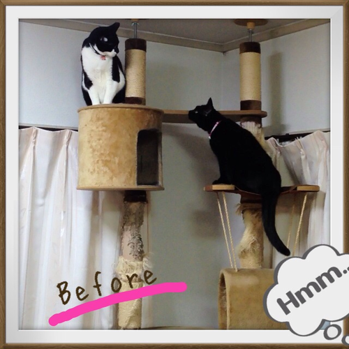 cattower1_20130429.png
