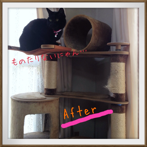 cattower2_20130429.png