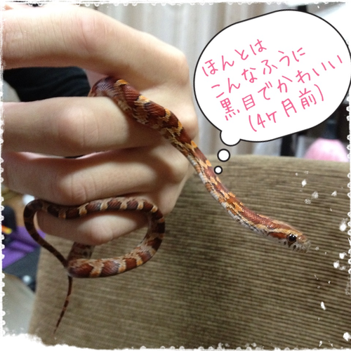 jasmin_20130412.png