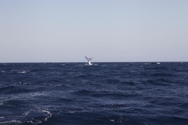 姫路の工業地帯沿岸にイルカとクジラが出没…専門家「非常に珍しい」
