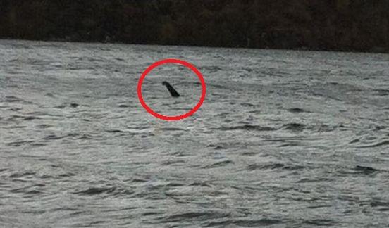 またもネッシー出現!ネス湖にて奇妙な物体を撮影か