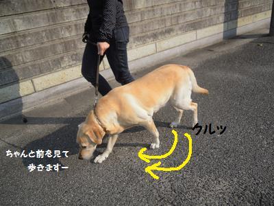 20131101121356da2.jpg