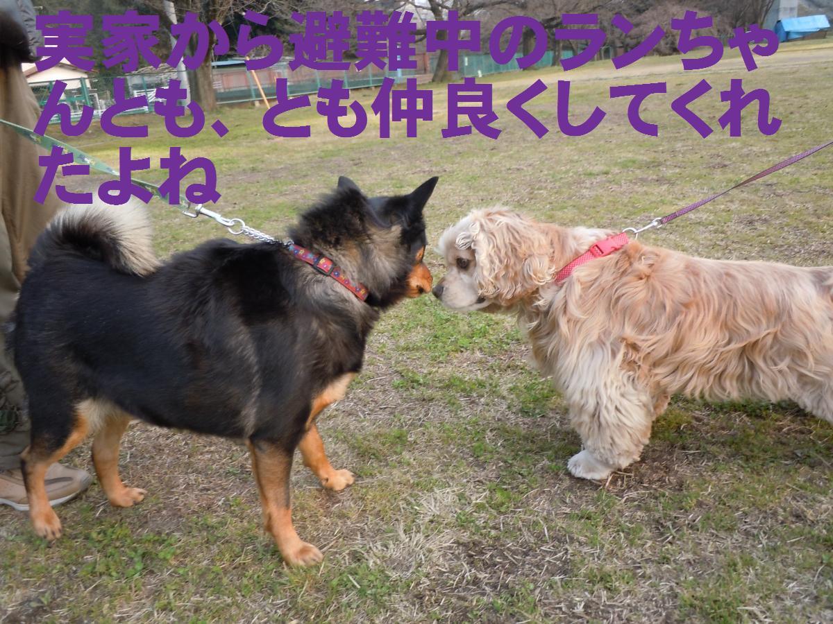 DSCN0849_convert_20141015111900.jpg