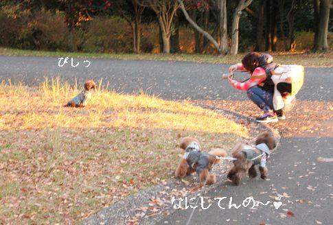 20141121074347ca5.jpg