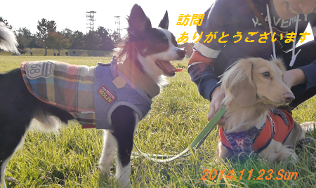 201411260108549a4.png