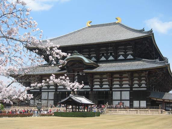 東大寺と郡山城の桜 069