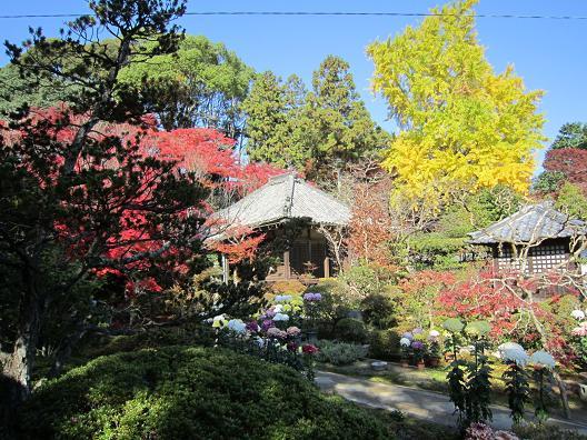 大門寺のイチョウの紅葉