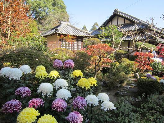 大門寺弁天堂と菊