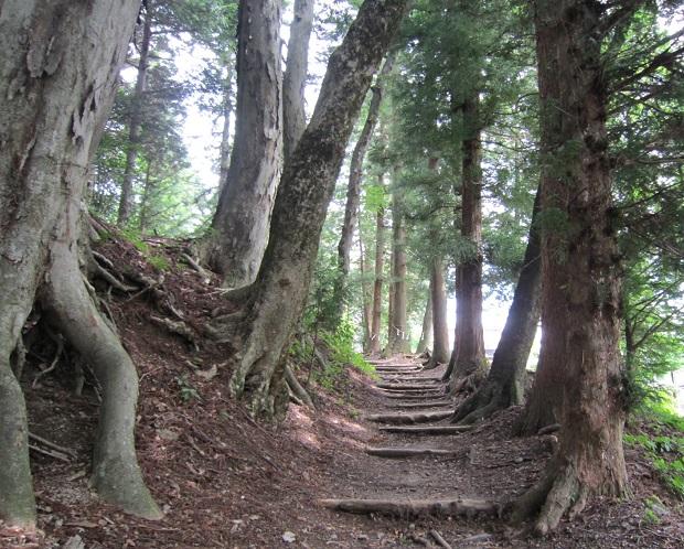 奈良井宿杉並木