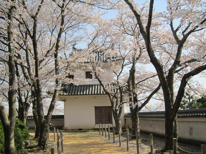 竜野城隅櫓と桜2