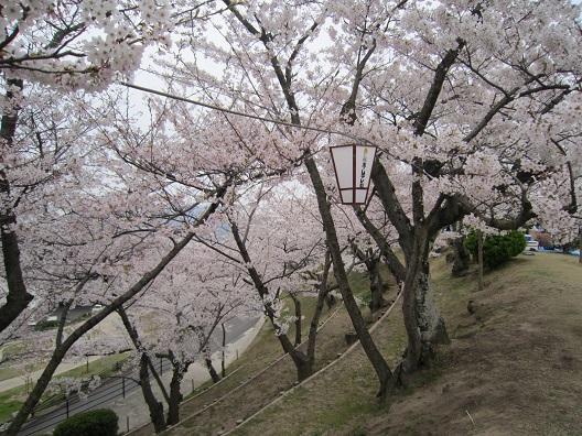 千光寺公園2