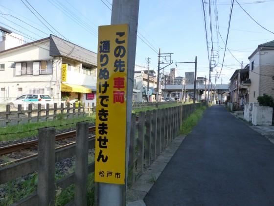 P1050952.jpg