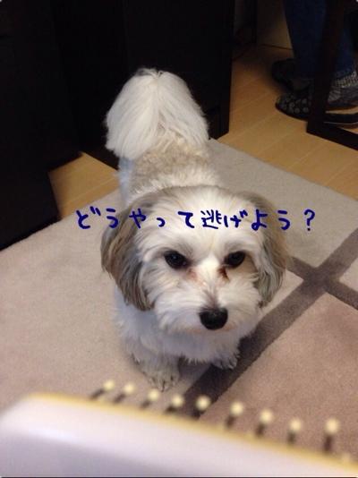 fc2blog_201401201656427f7.jpg
