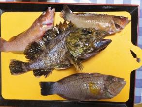 近海釣りたて~♪カサゴやベラ~その日のうちに食べちゃいます♪2014.11.07