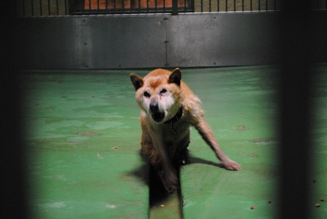 jspca.or.jp - 公益財団法人 日本動物愛護協会