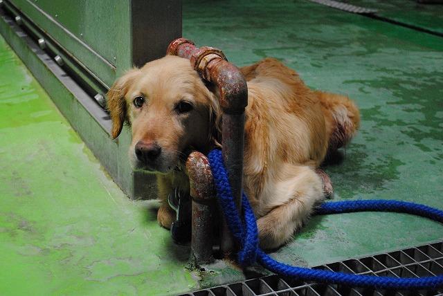 犬猫の譲渡会や里親探しを行っている動物愛護ボラ …