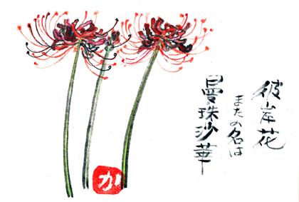 0923彼岸花