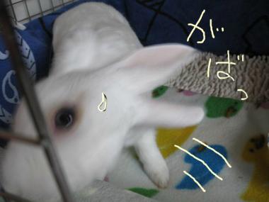 snap_usablog7716_2013110153158.jpg
