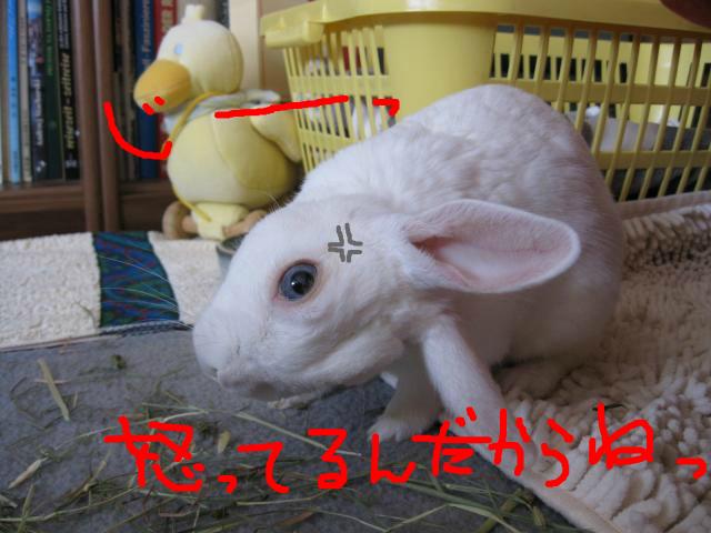 snap_usablog7716_201394123259.jpg