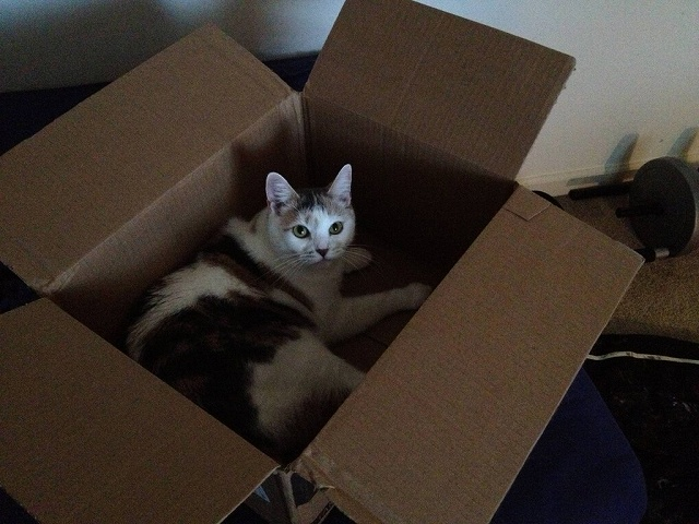 BoxCat_05.jpg