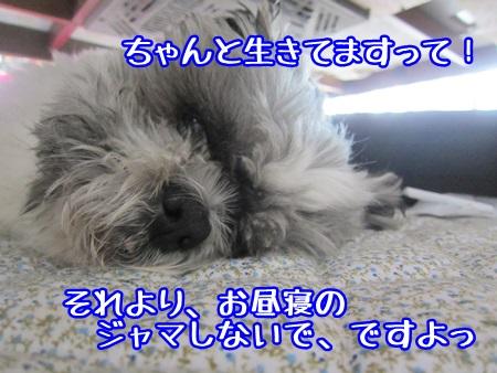 0529-04_20130529144223.jpg
