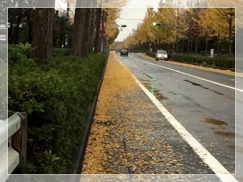 雨の並木道